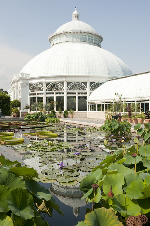 The Waterlily and Lotus Pools in the Enid A. Haupt Conservatory Courtyard