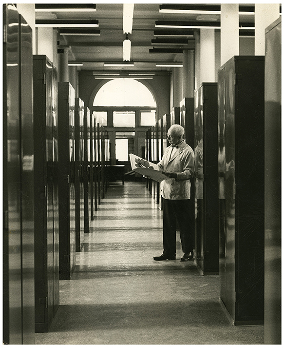 Arthur Cronquist in the Herbarium