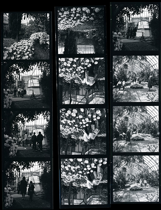 A contact sheet from a Dutch-themed exhibition of tulips in the Conservatory