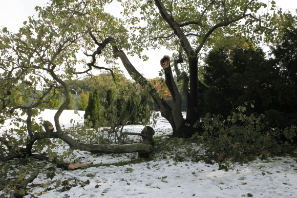 This weekend's historic October storm hit NYBG hard.