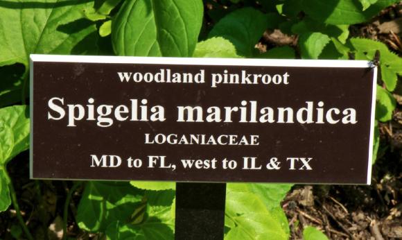 plant-label