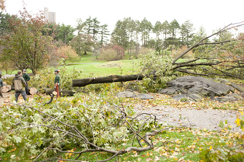 Workers clearing a downed tree at the edge of the Azalea Garden