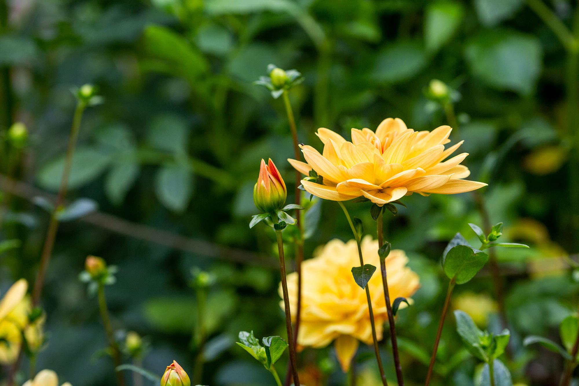 Whats Beautiful Now Autumn Perennials Plant Talk