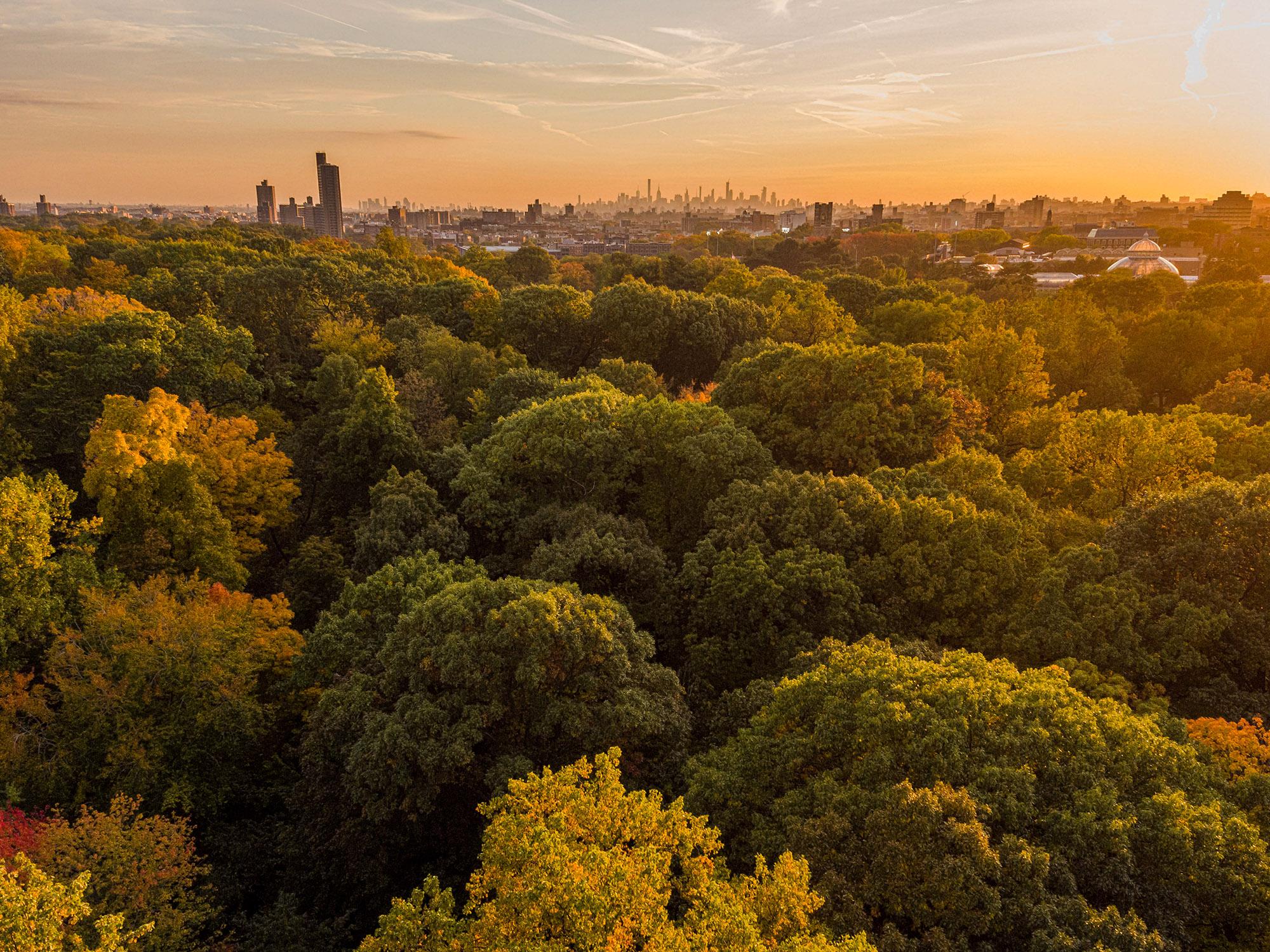 The Golden Bronx