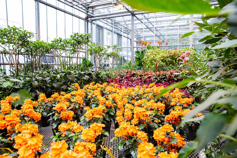 Nolen Greenhouses