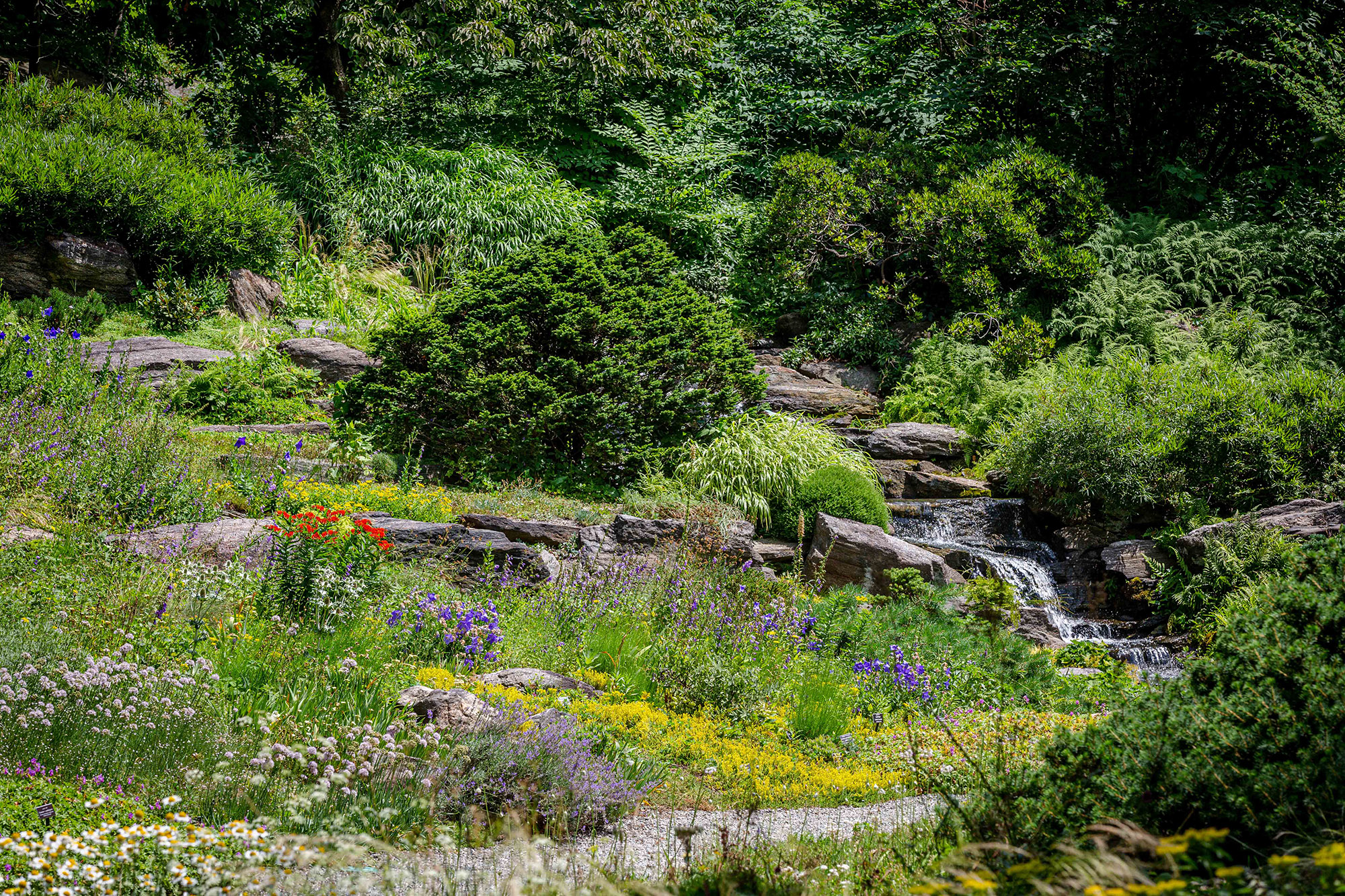 The Rock Garden