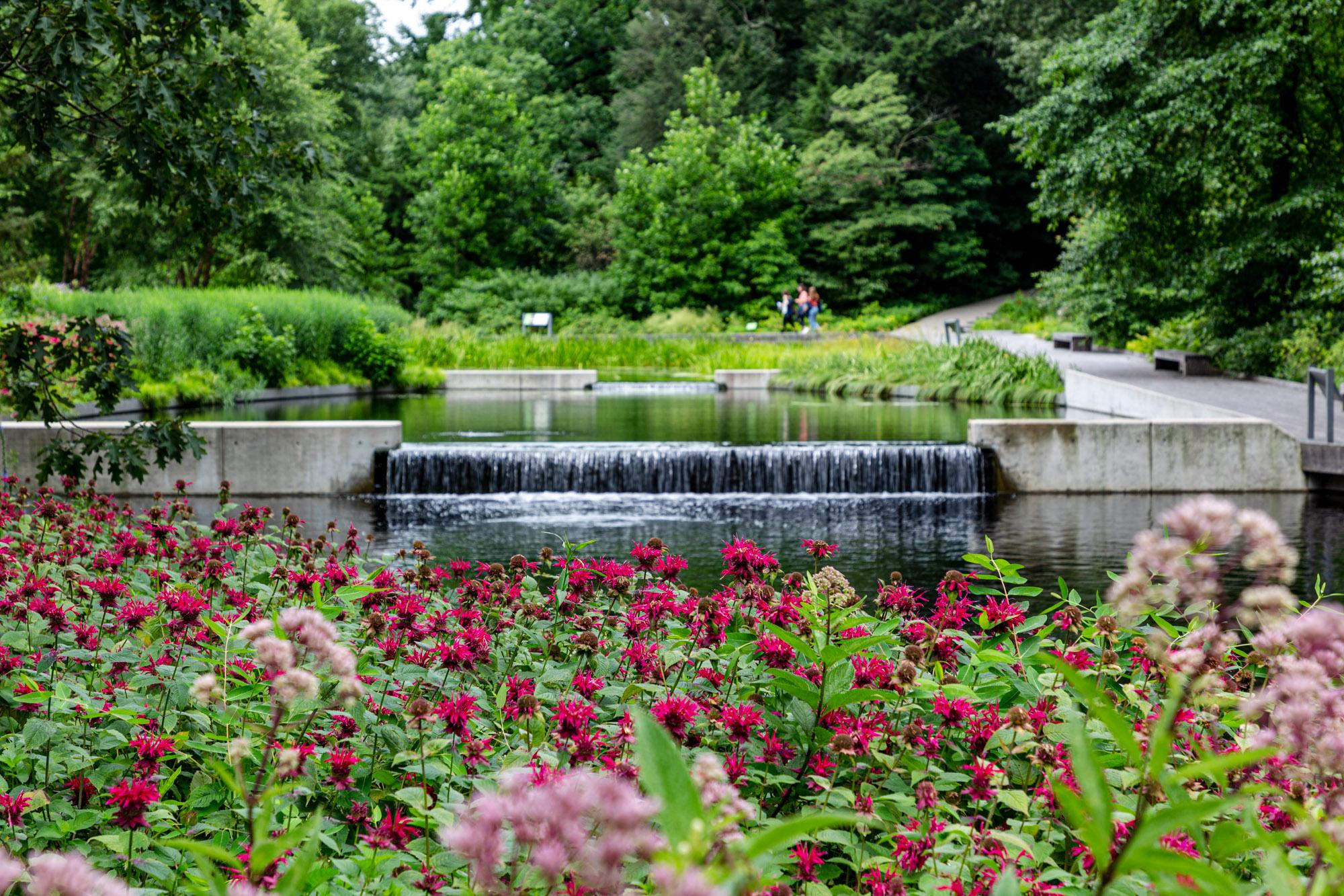 The Native Plant Garden