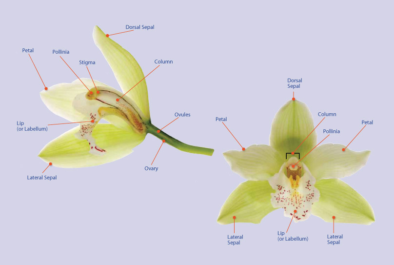 simple diagram of molecular structure of dna what makes an orchid different from other flowers? - plant ...