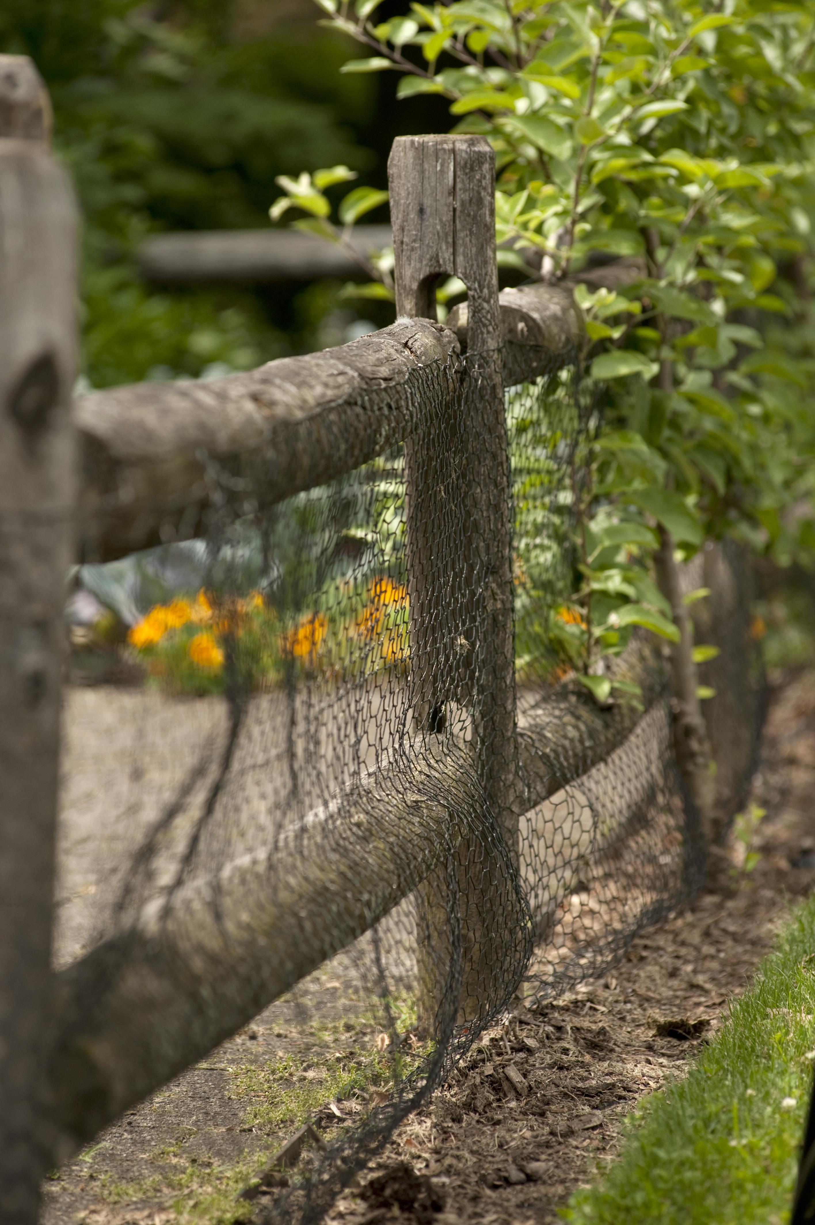Tip of the Week: More on Vegetable Garden Design - Plant Talk