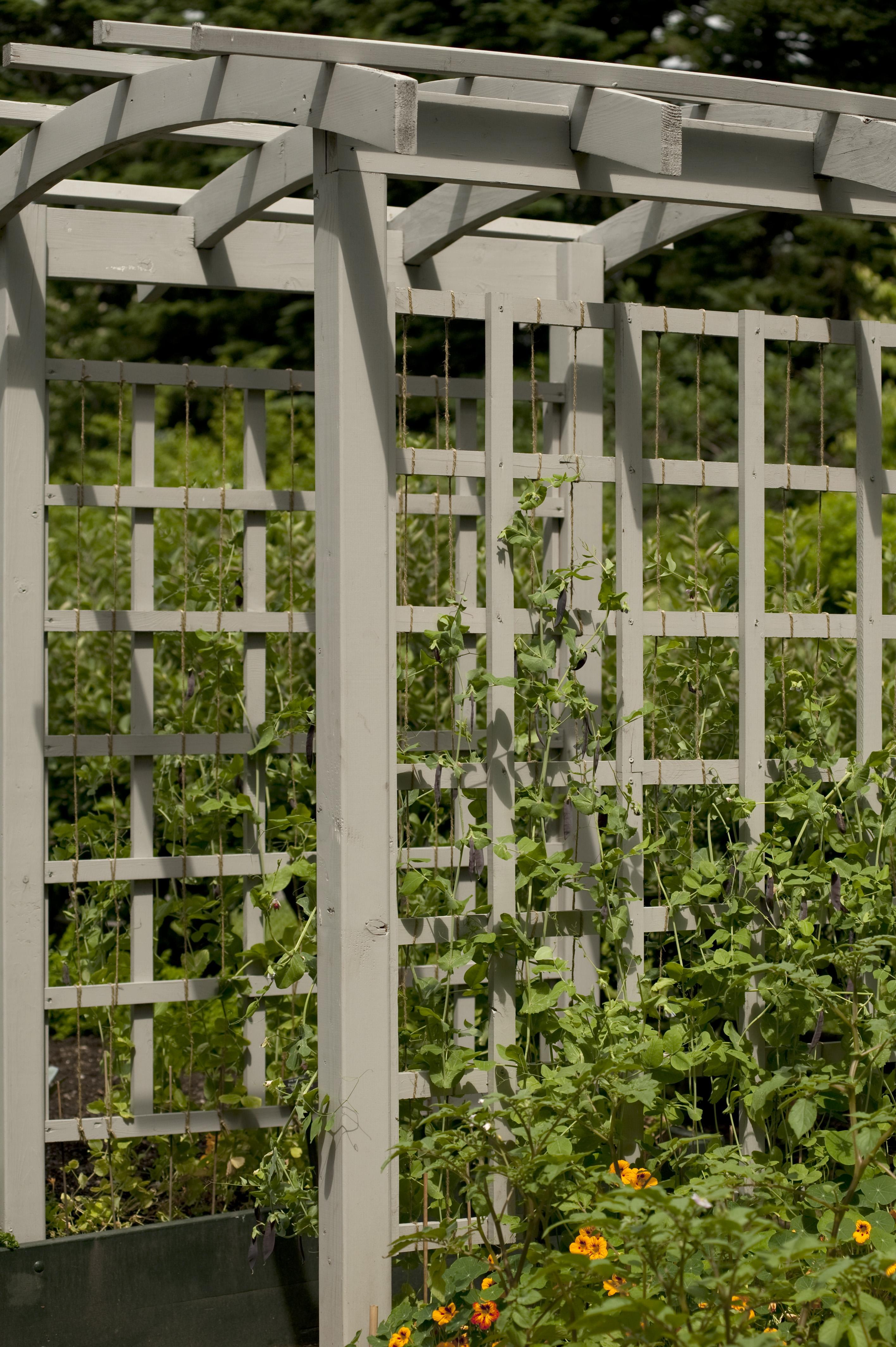 Tip of the week ornamental vegetable garden design for Ornamental vegetable garden design