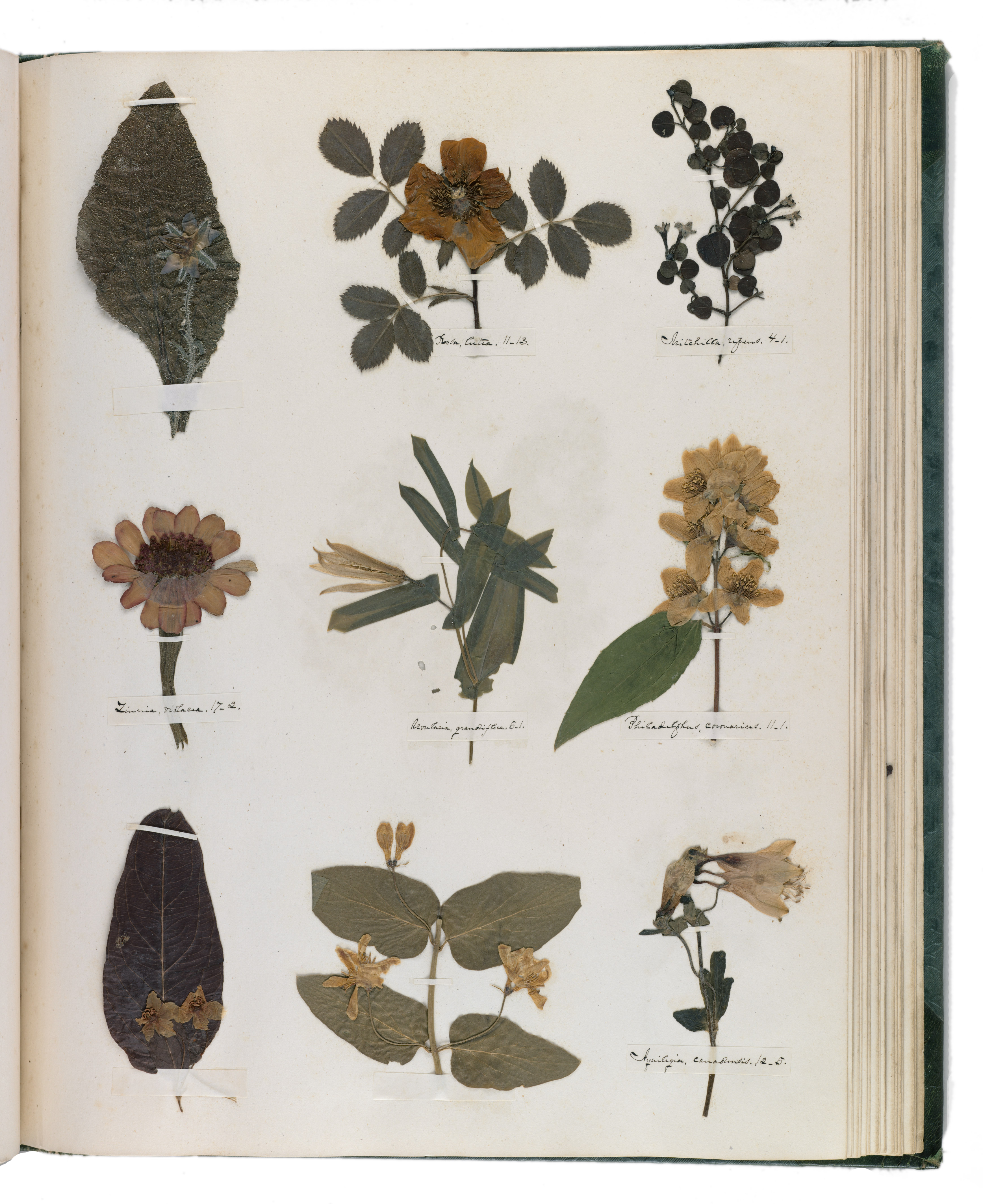 Emily Dickinson Archives Plant Talk