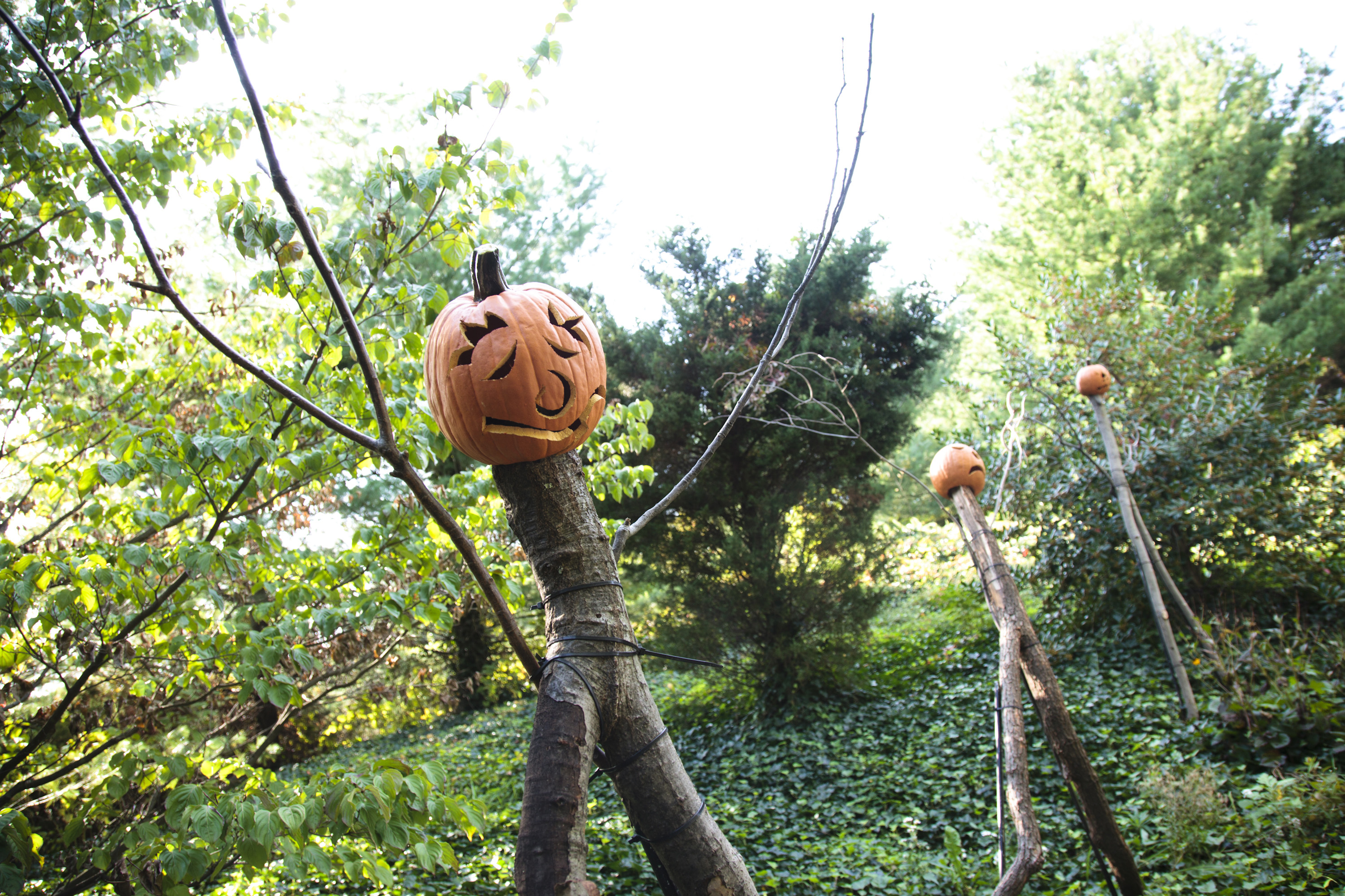 halloween hoorah for kids of all ages plant talk