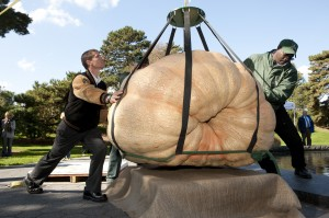 Grower Chris Stevens helps lower the 1,810.5 lbs pumpkin into place at The New York Botanical Garden.