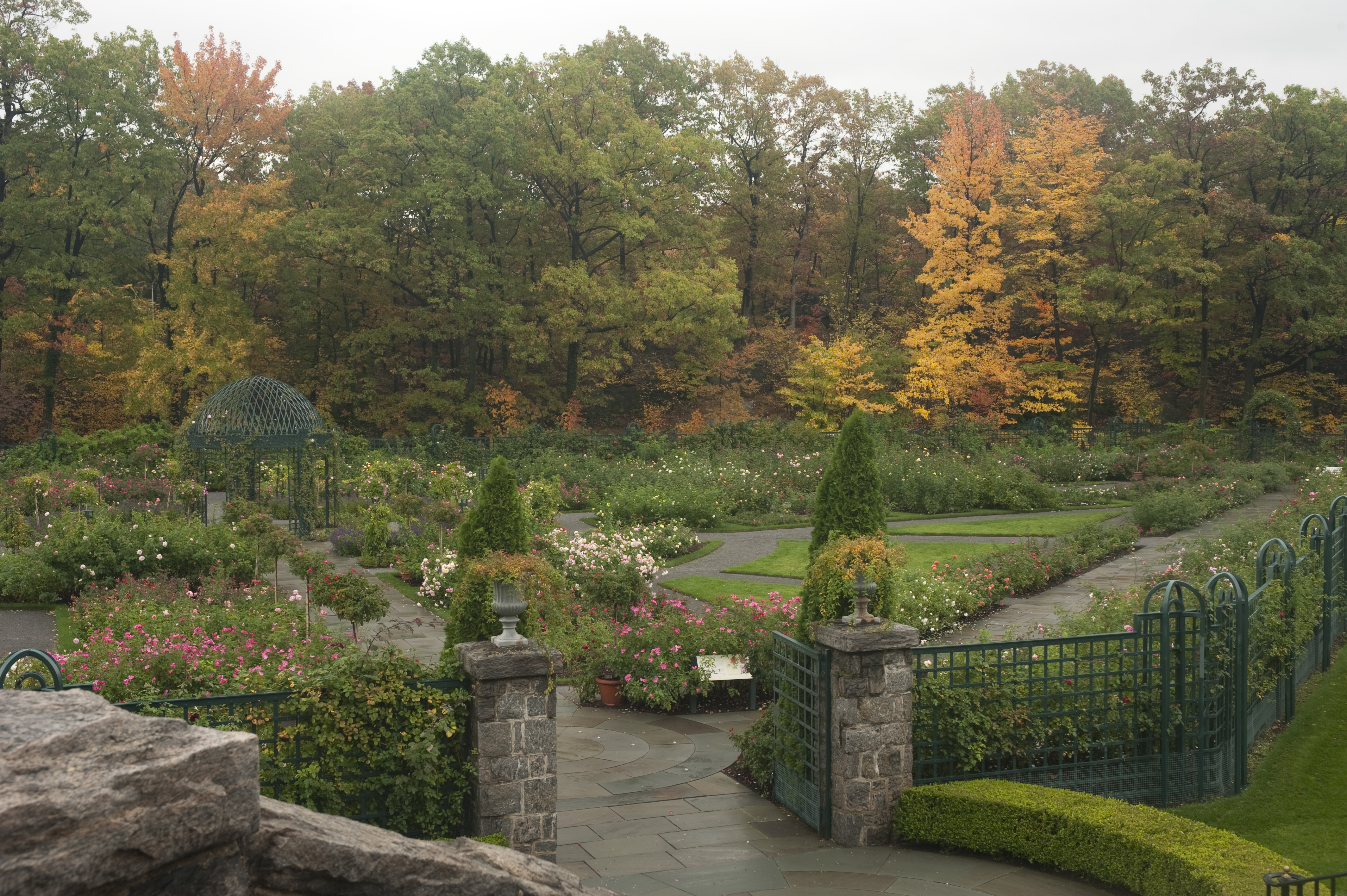 Plant Talk - Page 357 of 421 - Inside The New York Botanical Garden