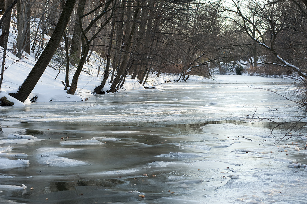 Ice floes on the Bronx River