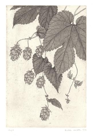 Hops, 'Humulus lupulus' © 2009 Bobbi Angell, copperplate