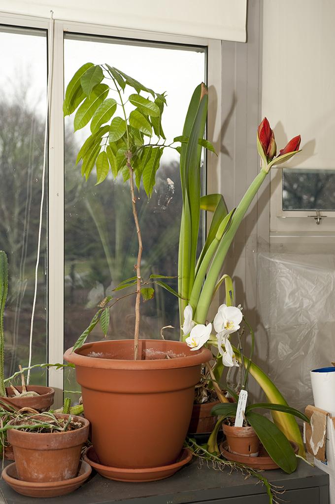 Doug Daly's Windowsill Garden