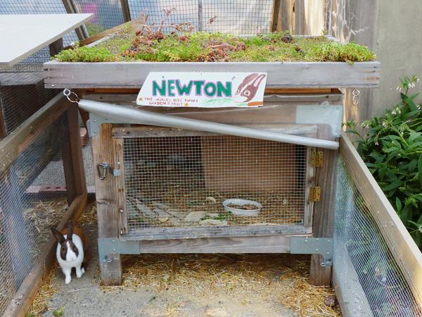 Newton Bunny in the Family Garden