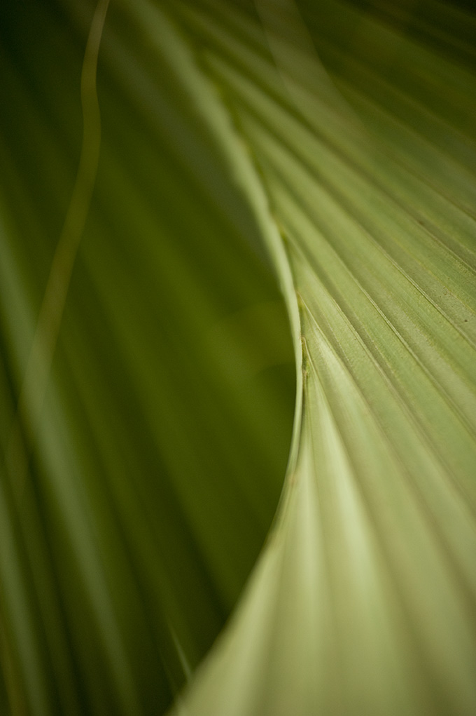 Palm Fronds in the Conservatory