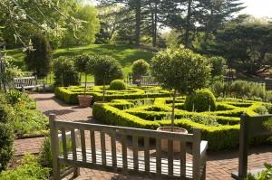 In the Nancy Bryan Luce Herb Garden