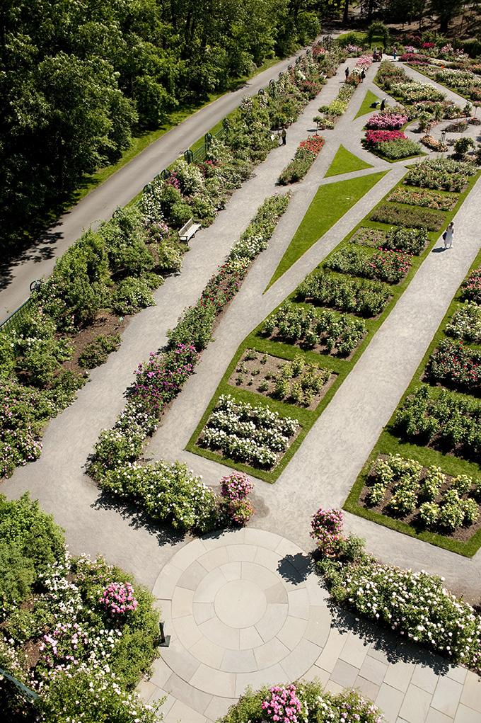 The Peggy Rockefeller Rose Garden, by Ivo M. Vermeulen