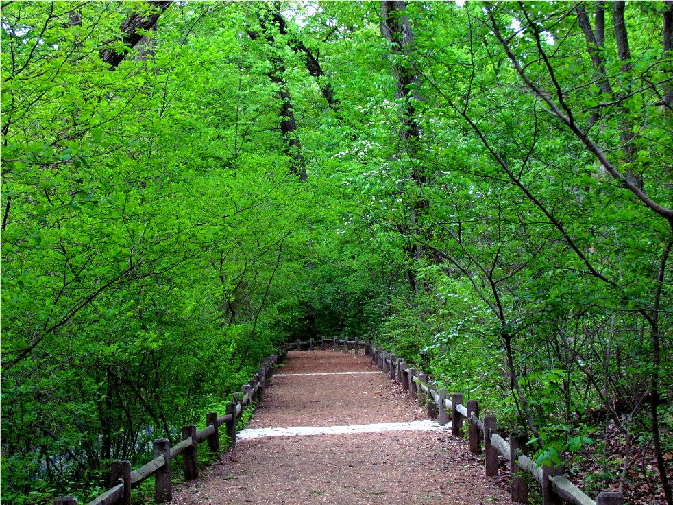 Spice Bush Trail