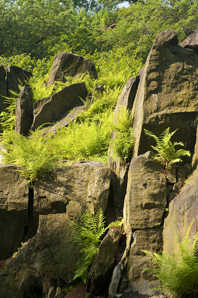 Ferns & Rocks