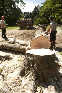 Garden Arborists Cut Down a Tree Acutely Damaged by Irene