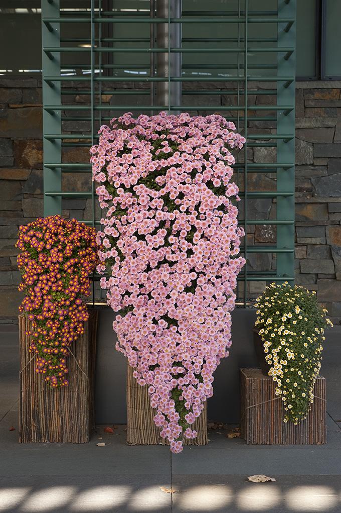 Kengai display