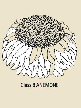 Class 8 Anemone