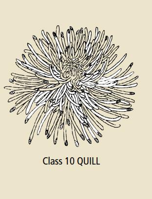 Class 10 Quill