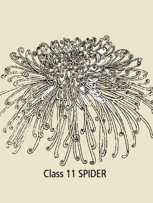 Class 11 Spider
