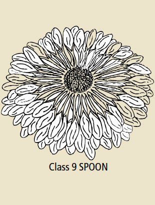 Class 9 Spoon