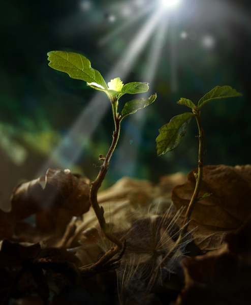 Competition 5, 4 Seasons ''Weather Eye'' First Place - Alan Price ''Oak Seedling''