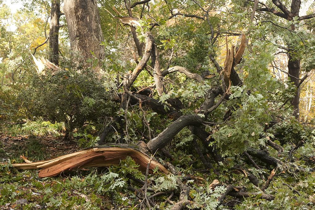 Blizzard-Damaged Trees at The New York Botanical Garden