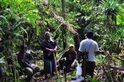 Pohnpei and Kosrae Study