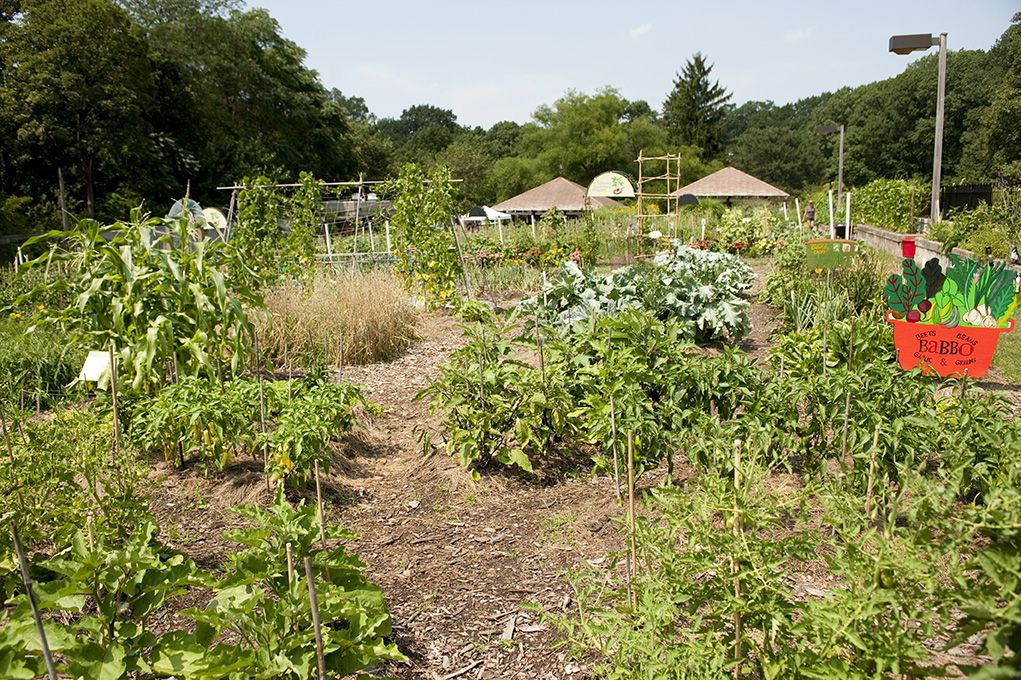 Mario Batali's Edible Garden