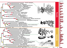 Tree of Life for Seed Plants