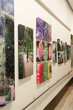 Elizabeth Murray's photos in the Ross Gallery