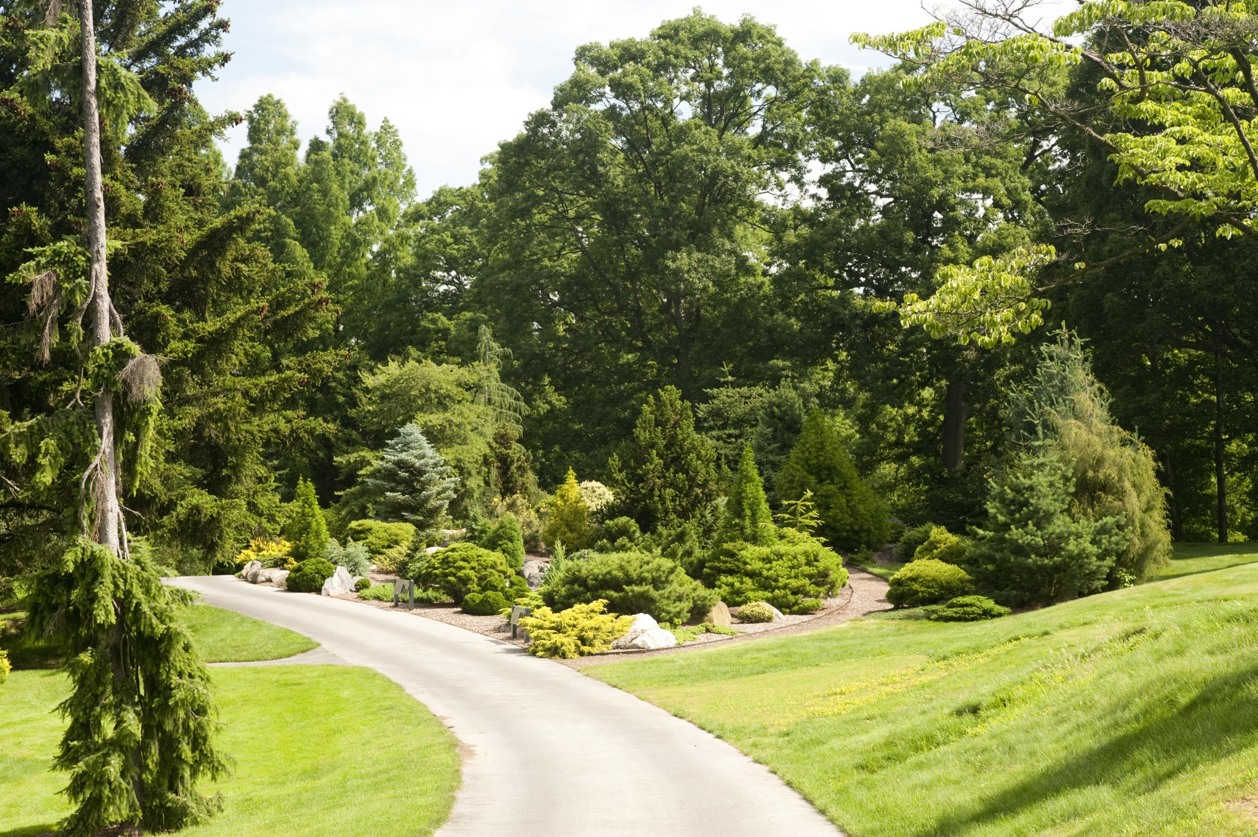 Ornamental Conifers Archives Plant Talk