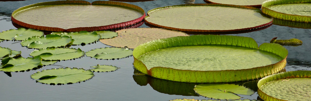South Eastern Connecticut Landscaping Water Lily Pond Archives