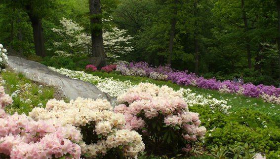 Travis Beck: Rewriting Landscape Design | NYBG