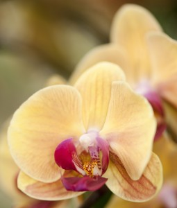 Orchid Evenings