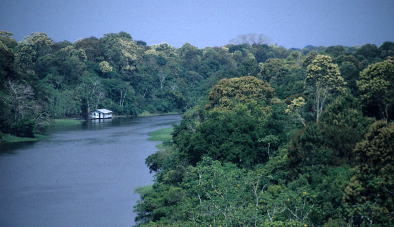 A backwater of the Rio Negro in Amazonian Brazil.
