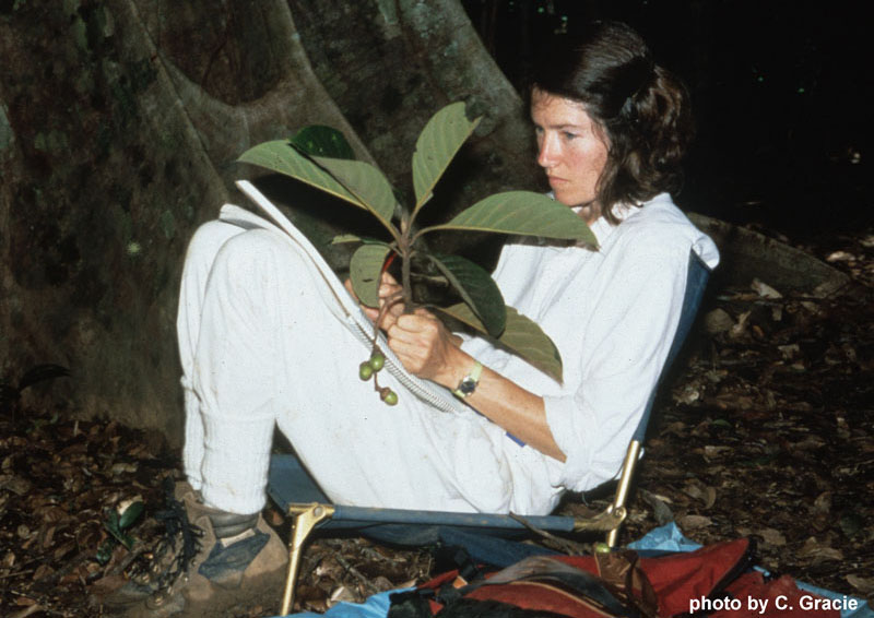 Botanical artist Bobbi Angell sketching plants in French Guiana.