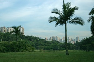 A view of the megalopolis of Sâo Paulo from the Botanical Garden.