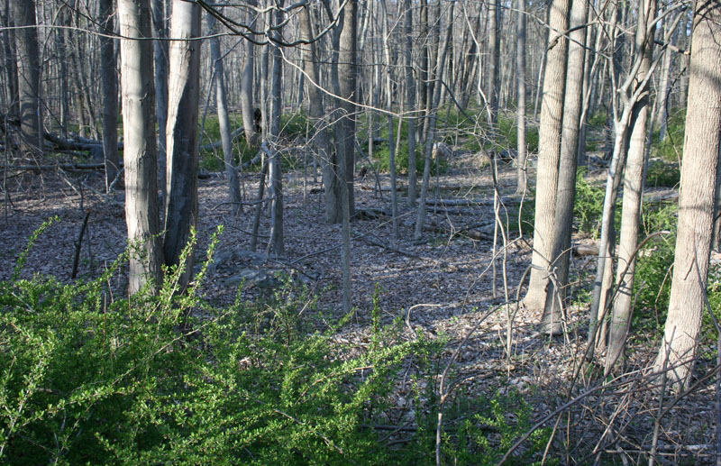 Forest Understory