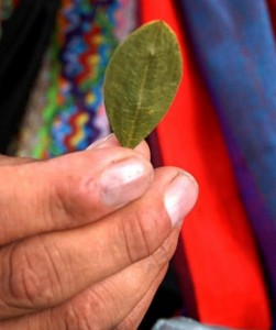 Coca leaf in Bolivia