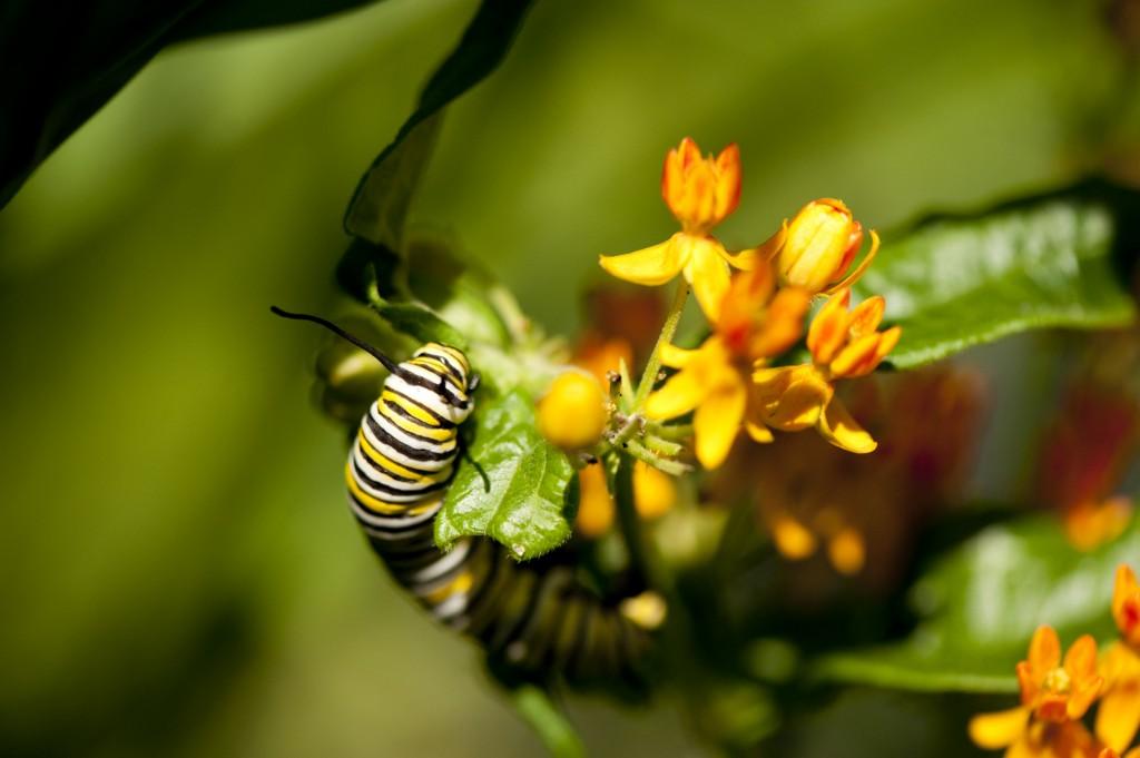 MEC-caterpillar-1024x681
