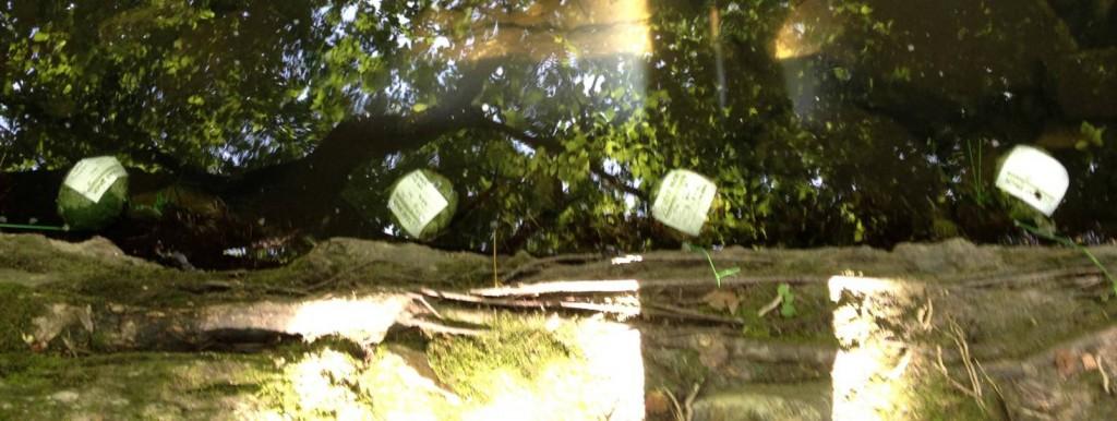 Set of leaf packs suspended in the Bronx River